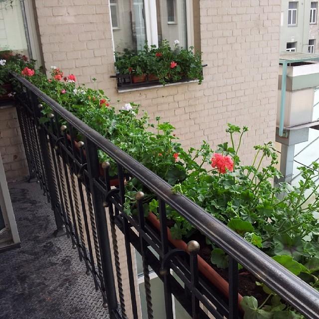 Цветы на балконе - tehno mashina.