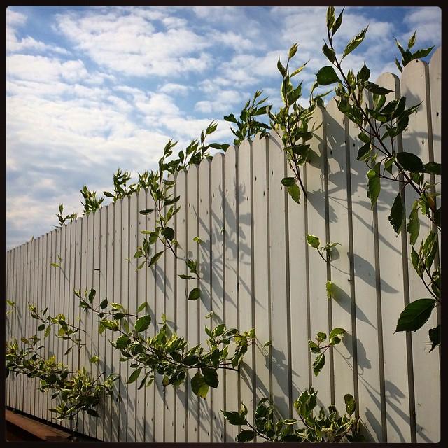 Как украсить изгородь на даче