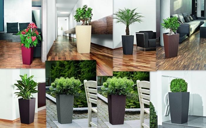 Благоустройство и озеленение города: улицы, квартиры, офиса